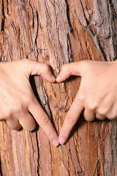 Holzstamm-Herzhände